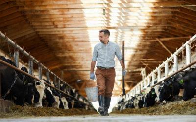 Présentation de l'ouvrage : « L'élevage pour l'agroécologie et une alimentation durable »