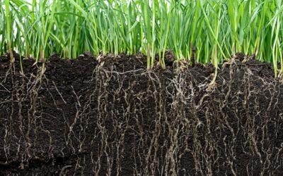 Il est urgent de sauver nos sols pour nourrir les Hommes