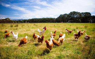 Améliorer les systèmes d'élevage : pas si simple, mais pas impossible !