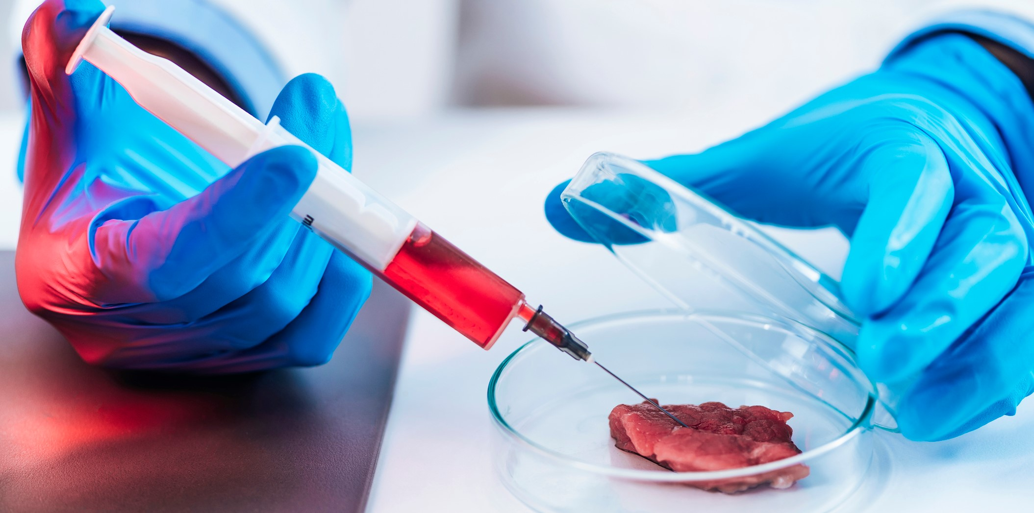 viande artificielle - in vitro - Sghaier Chriki