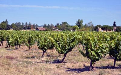 Les vins pétillent dans le Sud-Ouest : produit du terroir, raconte-moi ton histoire